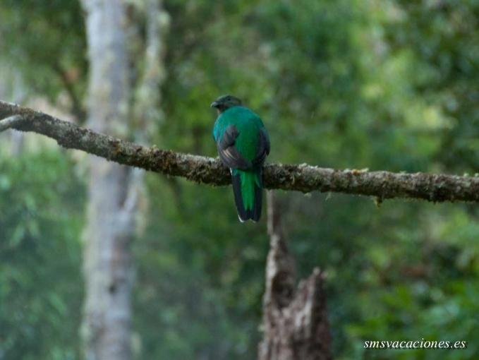Circuito Costa Rica: Biosfera