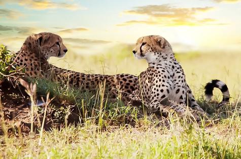 Safari Kenia Explorer