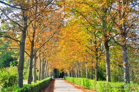 Qu visitar en aranjuez madrid for Jardines que visitar en madrid