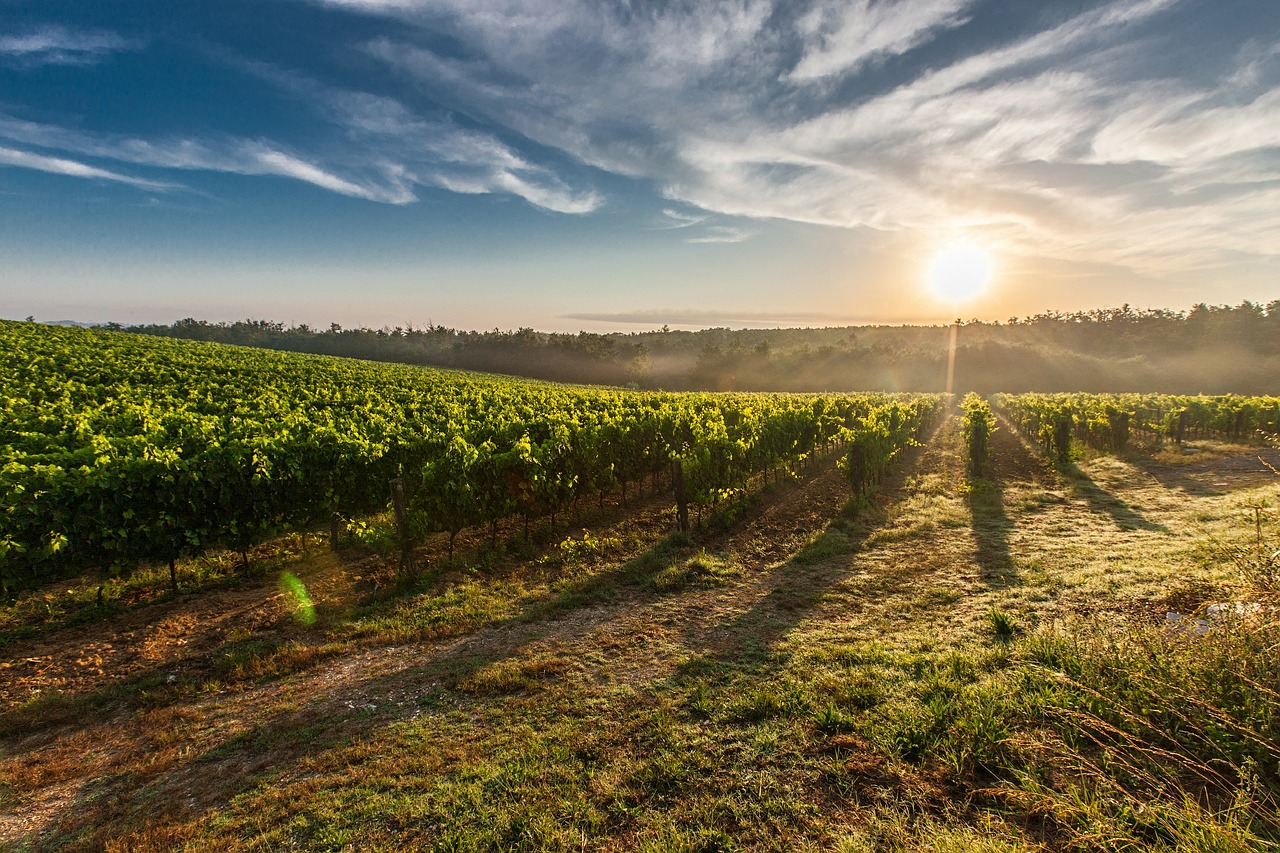 Viñas-Priorat-Tarragona