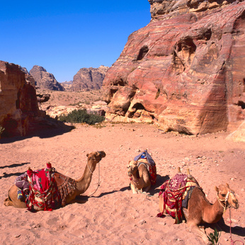 Viaje al Desierto Jordano