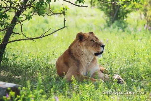 Safari Kenya Kiboko